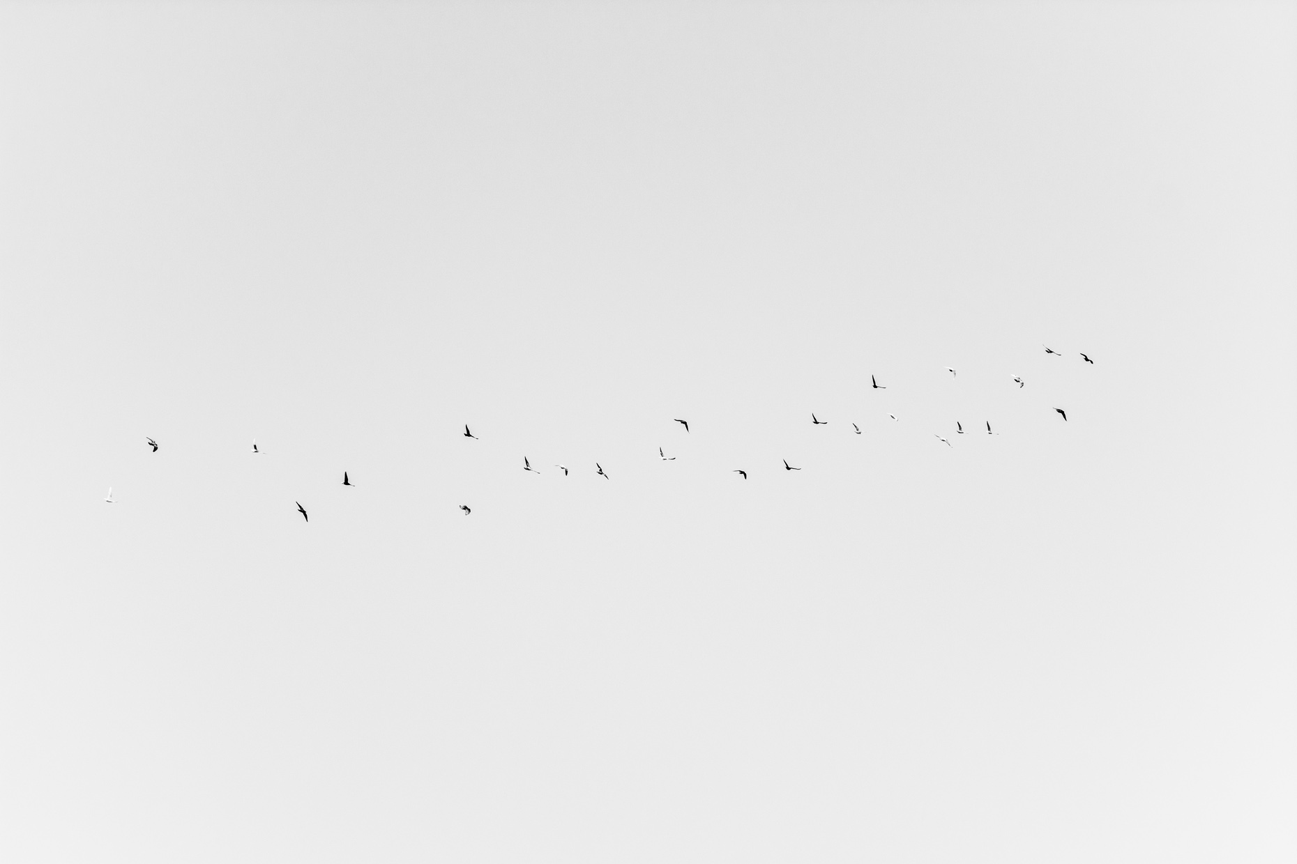 An image from the project 'Flight', a photography project by George Burke featured on blume